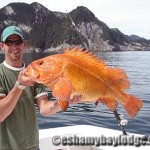 Large Yelloweye Rock Fish in Prince William Sound